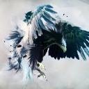 Bird67