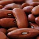 Bean S.R.
