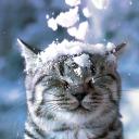 Kitty Cat 🐈