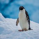 Penguin330