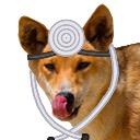 Doctor Dingo